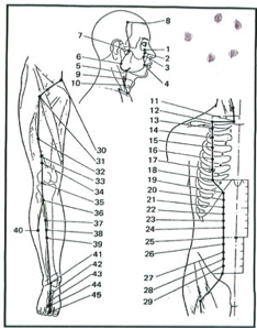 Points Acupuncture Reference Software